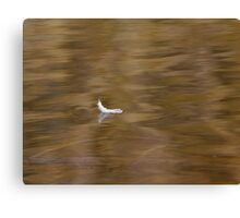 The Floating Feather Canvas Print