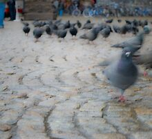 Pigeons Shopping by Bradley Old