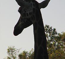 Giraffe silhouette by Mel1973