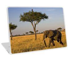 Elephant Safari Laptop Skin