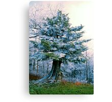 FIR TREE, CLINGMANS DOME* Canvas Print