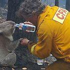 Koala survival by Vicki Hancock