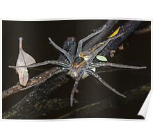 Water Spider with Eggs Poster