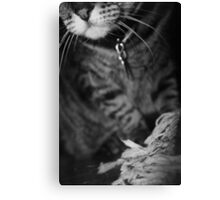 Wiskers & Threads Canvas Print