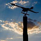 Flight by Jared Revell
