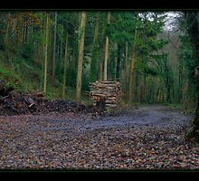 Plymbridge Woods by sasraku