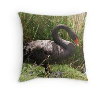 Beautiful Black Swan Throw Pillow