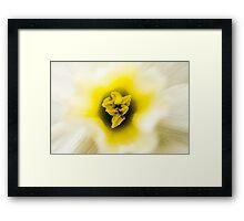 Daffodil I Framed Print