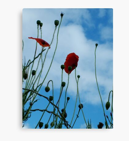 Tall Poppies Canvas Print