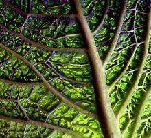 cabbage by Etienne RUGGERI Artwork eRAW