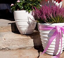 ling plant in white big flowerpot  by Arletta Cwalina