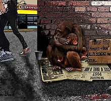 Homeless-Chimps-Justin-Beck-Picture-2015083 by Justin Beck