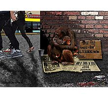 Homeless-Chimps-Justin-Beck-Picture-2015083 Photographic Print