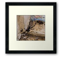 Hello, Mr. Spider Framed Print