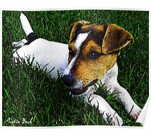 Jack Russell Justin Beck Picture 2015097 Poster