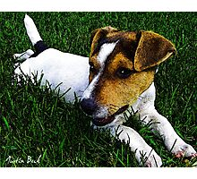 Jack Russell Justin Beck Picture 2015097 Photographic Print