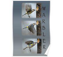 Warbler Collage Poster