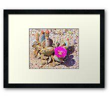 Desert pear Framed Print