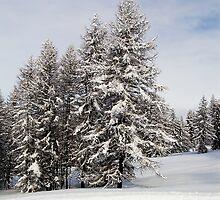 Snow laden by Steve plowman