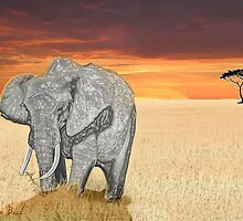 Savana Elephant Justin Beck Picture 2015085 by Justin Beck