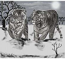 Snow Tigers Grey Justin Beck Picture 2015087 Photographic Print