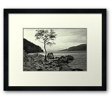 Tree with a View Framed Print