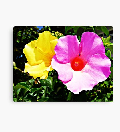 Mr Yellow & Ms Pink Canvas Print