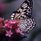 Idea Leuconoe Butterfly by Marylou Badeaux