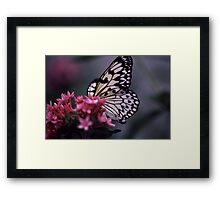 Idea Leuconoe Butterfly Framed Print
