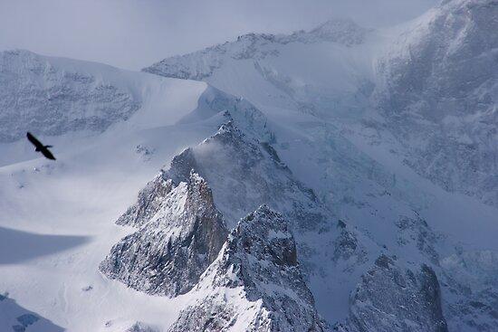 Bird of Prey, La Rateau Mountain, The French Alps by Elizabeth Turner