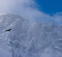 Bird of Prey in the Mist, La Grave, The French Alps by Elizabeth Turner