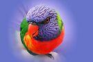 Rainbow Lorikeet by Ian Berry