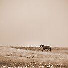 Mustang by Mitch  McFarlane