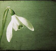 Spring by Anne Staub