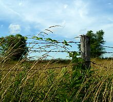 Country Feeling by Tracy Engle