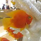 Colorful Fish, Macy's Herald Square, New York City by lenspiro