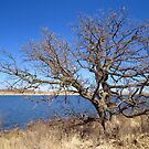 Just Like A Tree Planted By The Water by lorilee