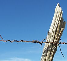 Barbed Wire World by Rachel Sonnenschein