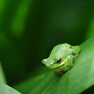 It's good being green by Catherine Davis