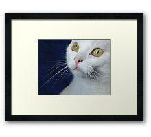 What Big Eyes You Have.... Framed Print