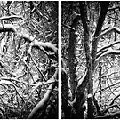 Winter Journeys no.50: Snow Covered Trees In The Forest by Solomon Walker