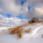 Winter Comes Softly by Curtiss Simpson
