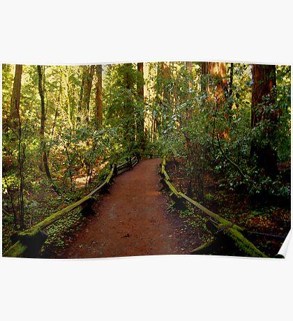 Redwood Trail 1 Poster
