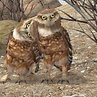 Burrowing Owls by Ken Gilliland