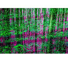 """""""Deep Coral and Emerald"""" Photographic Print"""