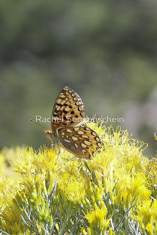 Butterflies belong on Mountains by Rachel Sonnenschein