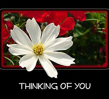 Thinking of You by Sheryl Kasper