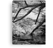 Fallen rush Canvas Print