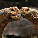 Tortoise Magic by Sue  Cullumber