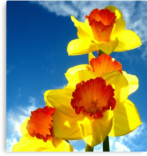 Daffodils In The Sky by scenebyawoman